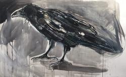 Ragged Crow