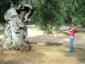 Jo-&-Olive-Tree